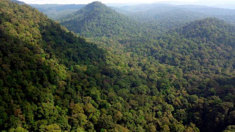 MACC must investigate permit for forest plantation project: MP