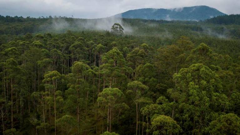 Retain forest cover at critical wildlife routes: Christina