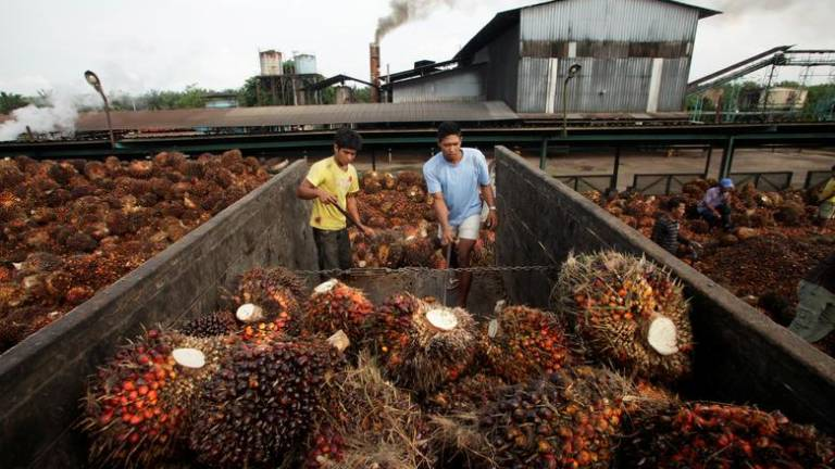 Trade deal could hurt Malaysia palm oil exports to China: Official