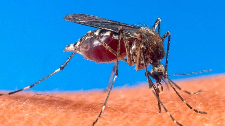 Dengue cases on the rise in Negri Sembilan