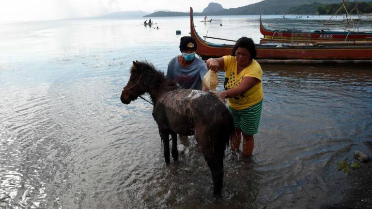 Risking lives to rescue horses in Philippine volcano 'no man's land