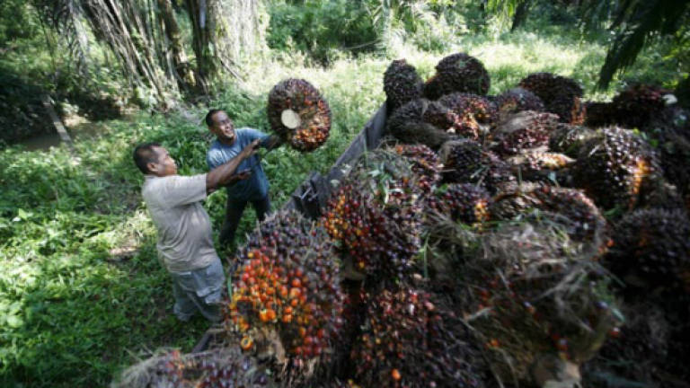 Felda Global Ventures to step up mechanisation efforts