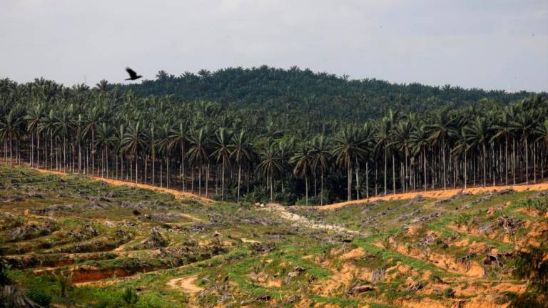 Watchdog head urges palm oil industry to look beyond forests in climate fight