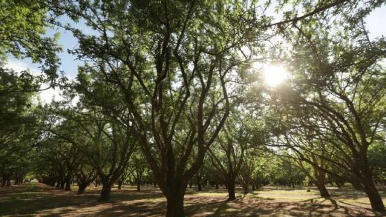 California almond industry calls for quick solution to US–China trade frictions