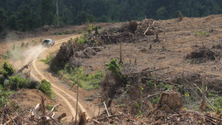 Sungai Pahang on the verge of destruction, says specialist