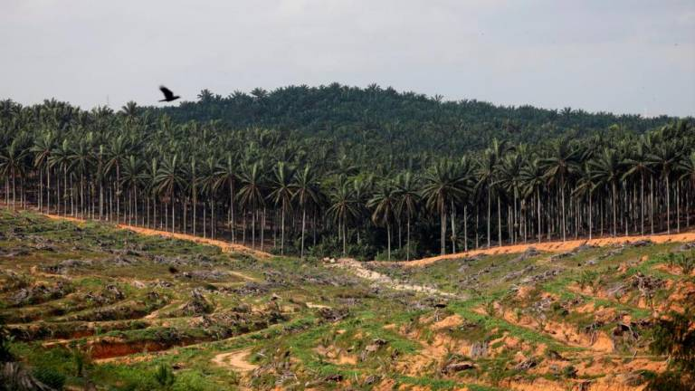 Guessing game over India's position on palm oil imports from Malaysia