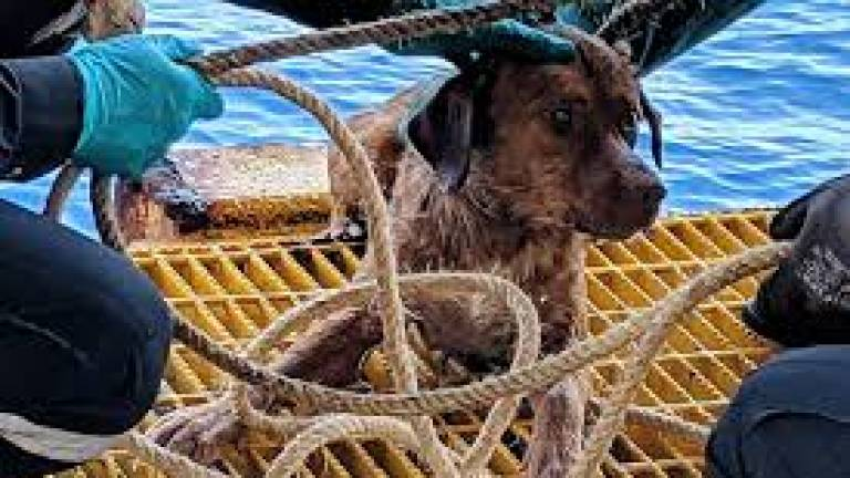 (Video) Dog stranded in the Gulf of Thailand rescued by oil rig workers