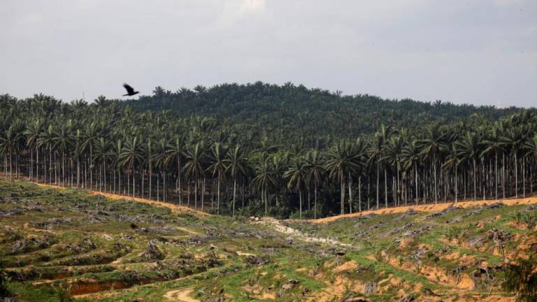 "MIDF maintains ""negative"" call on plantation industry"