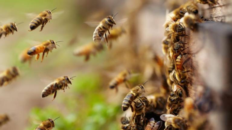 Eye of the swarm: Experts take sting out of urban beekeeping