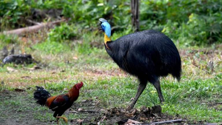 Exotic, dangerous bird kills owner in Florida