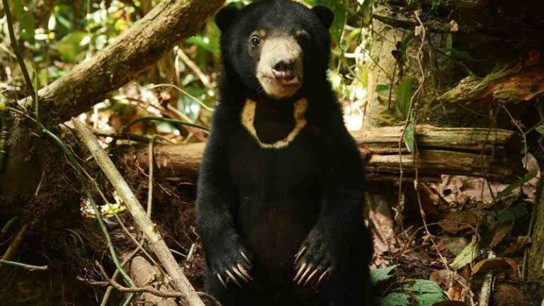 Sun Bear Centre perseveres despite closure to public