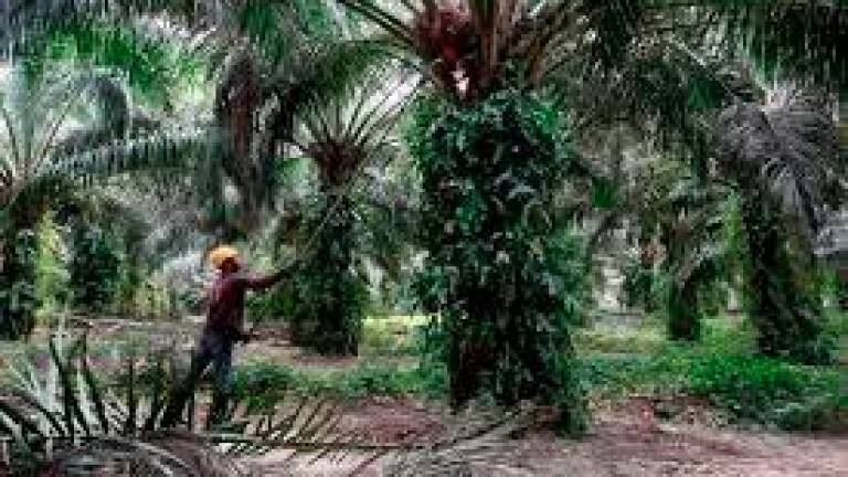 Promotional activities to counter EU's anti-palm oil campaigns -MPIC