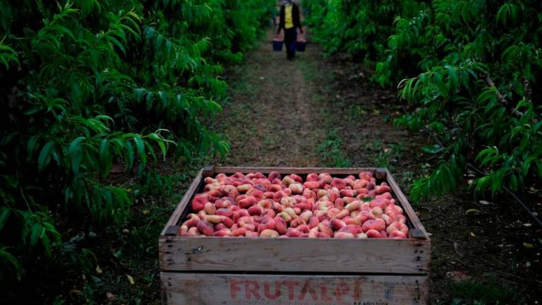 In Southern Spain, fruit pickers ditched as virus spreads
