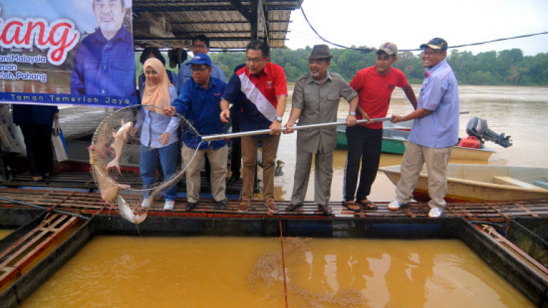 Ikan patin generates additional income for Temerloh folks