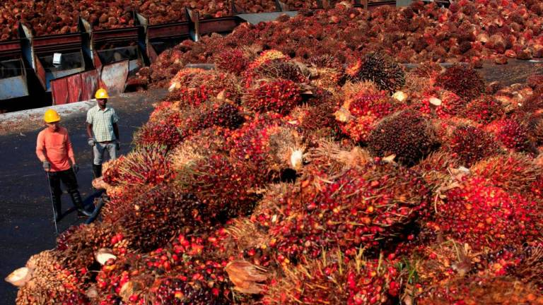 Poland against EU plan to ban use of palm oil for biofuels: Envoy