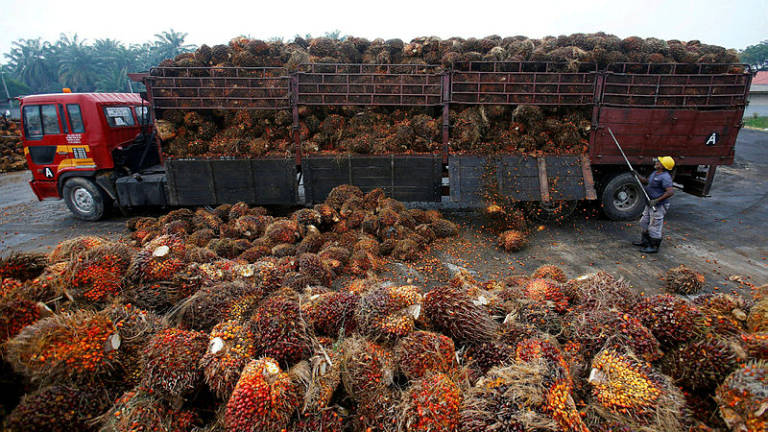 India's import tax on crude palm oil from Asean unchanged: Sources