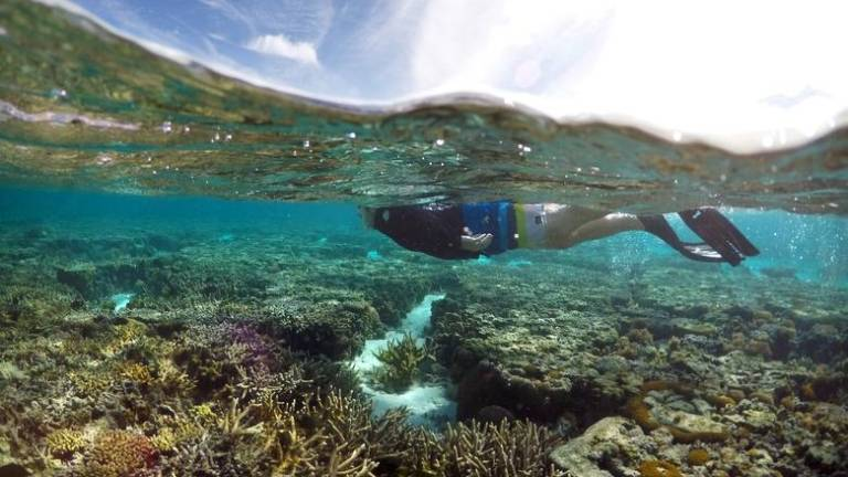 Sabah Parks investigating damage to coral reefs
