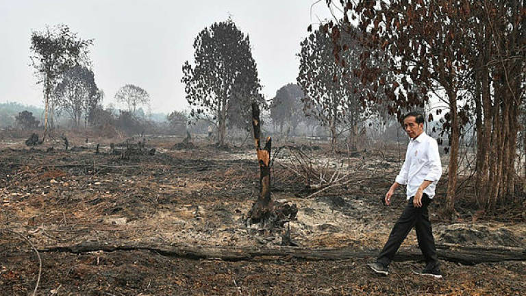 Forest fires: Indonesia says it's coordinating with Malaysia