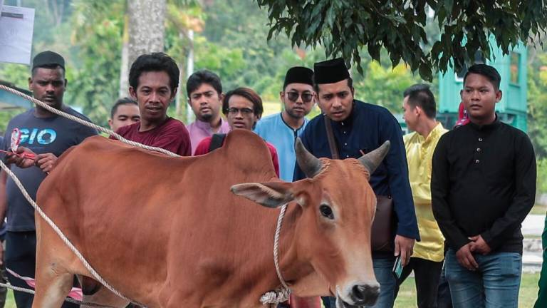 RM6m boost for Limbang buffalo rearing industry: Uggah