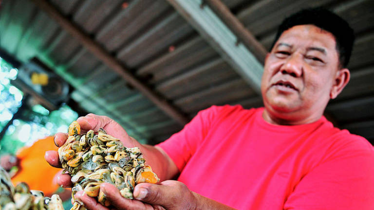 Livelihoods of fishermen affected after Sungai KimKim pollution