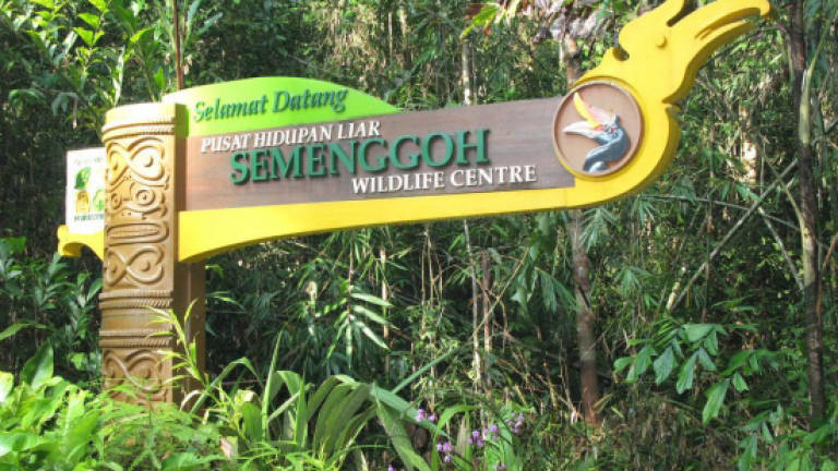 Semenggoh wildlife rehabilitation centre awaits royal visit