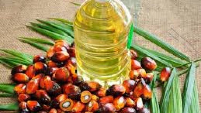'Tact and diplomacy needed to counter EU palm oil threat'