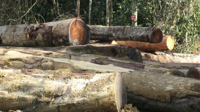 Timber exports stopped to meet needs of local factories: Mohd Shafie