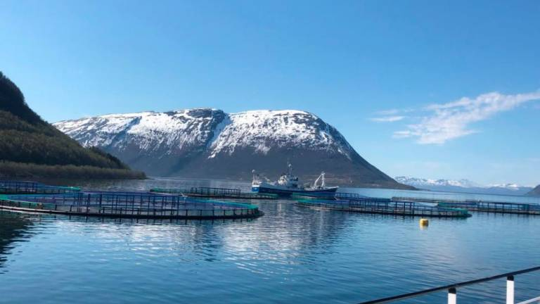 Norway salmon farms ravaged by algae bloom: Authority