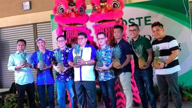 DSTE Capital set to be largest producer of MD2 pineapples