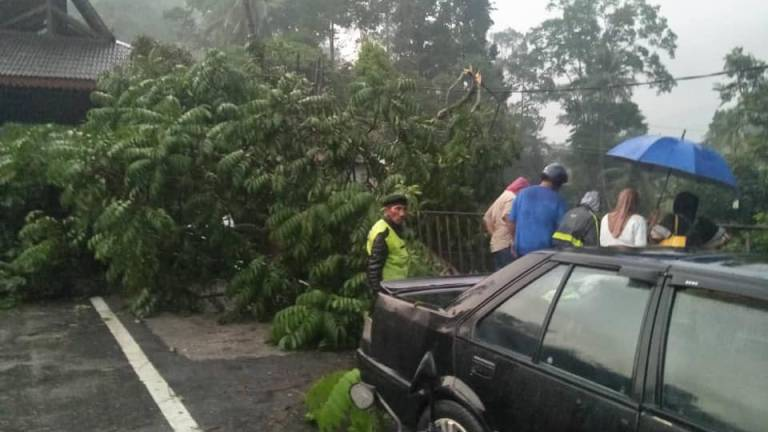 8 injured after tree falls on five houses in Gombak