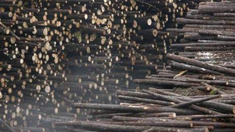 Malaysia's timber products export hits RM12.5b