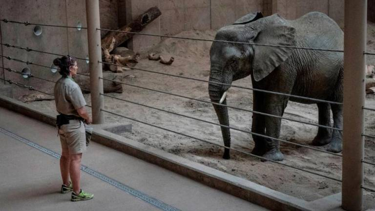 Ban on sending wild elephants to zoos a step closer
