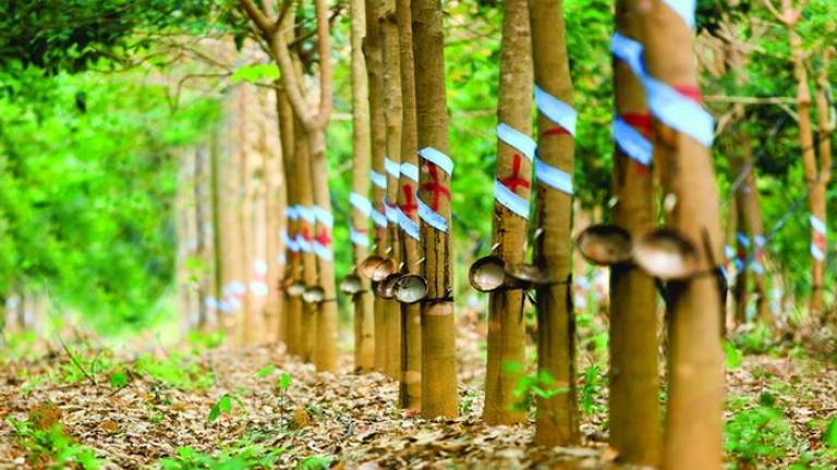 Indonesia, Malaysia, Thailand committed to developing Rubber City
