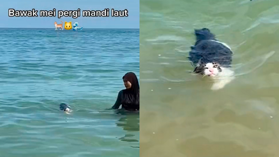 Malaysian woman is inspired to learn swimming thanks to her cat