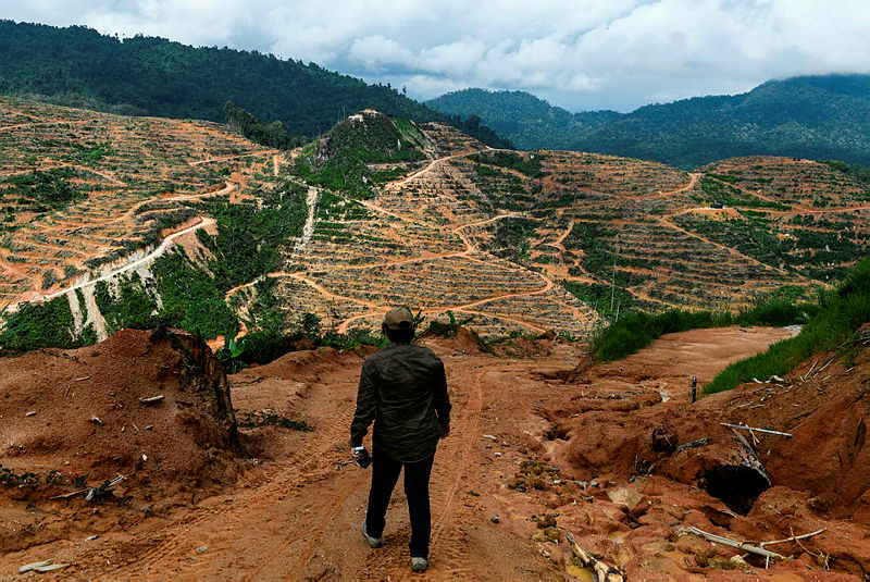 This picture taken on Dec 19, 2018 shows a worker for a non-governmental organisation (NGO) walking in a durian plantation in Raub. — AFP