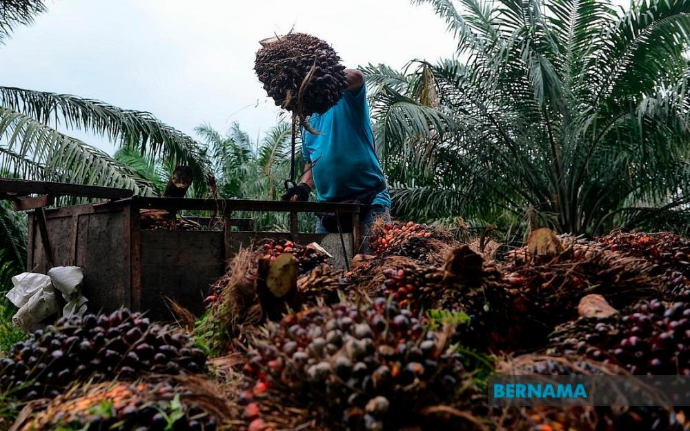MPIC in midst of developing new variety of oil palm tree - Wee