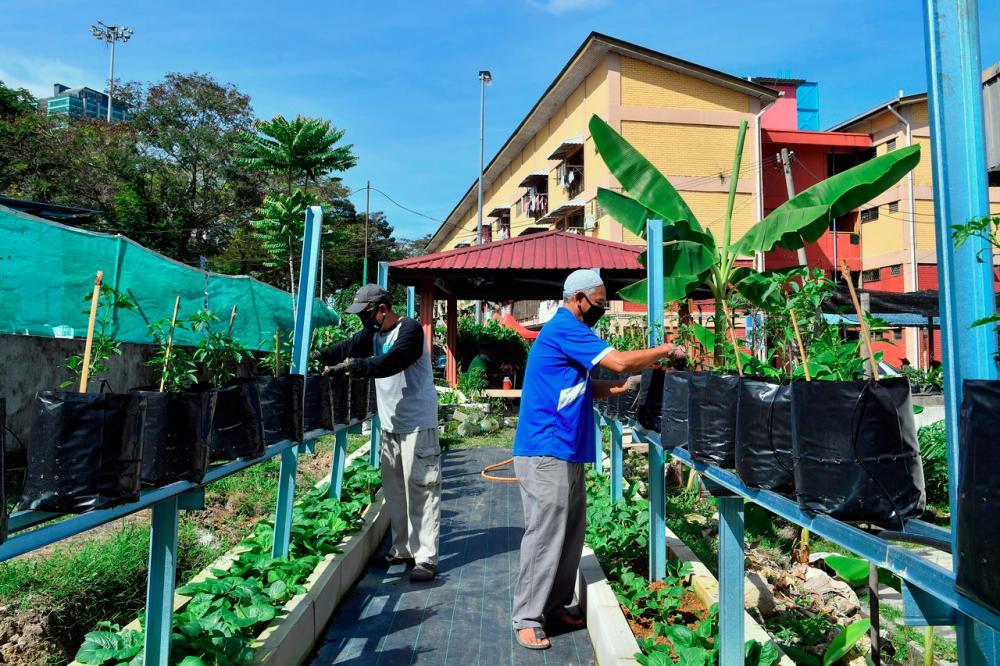Abdul Aziz Yahya (right) dan Mohd Nor Ahmad (left) tending to their vegetbale garden that they started in 2013 at Perumahan Awam Seri Perlis 2 in Kuala Lumpur--fotoBERNAMA (2021) Copyrights Reserved