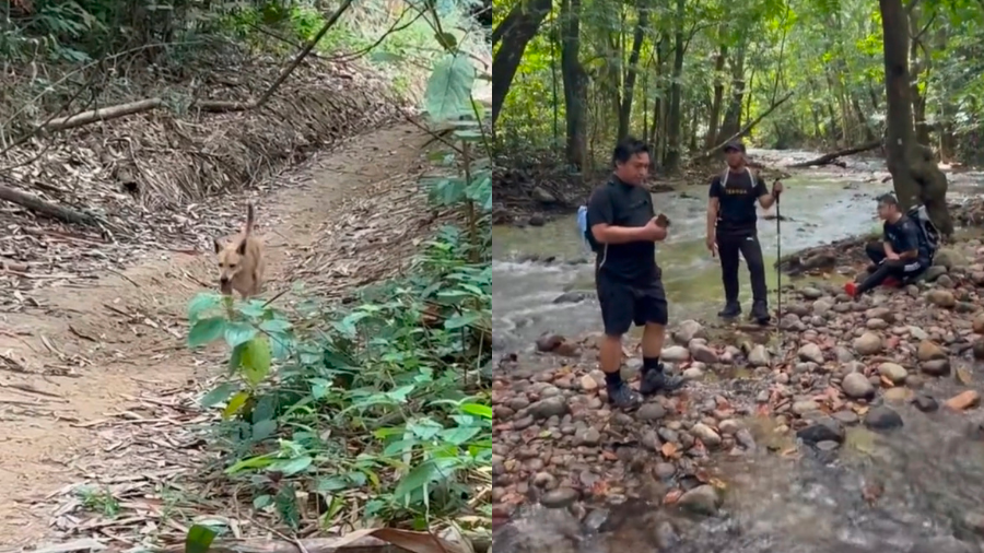 Malaysian hikers followed by protective furry companion on their journey