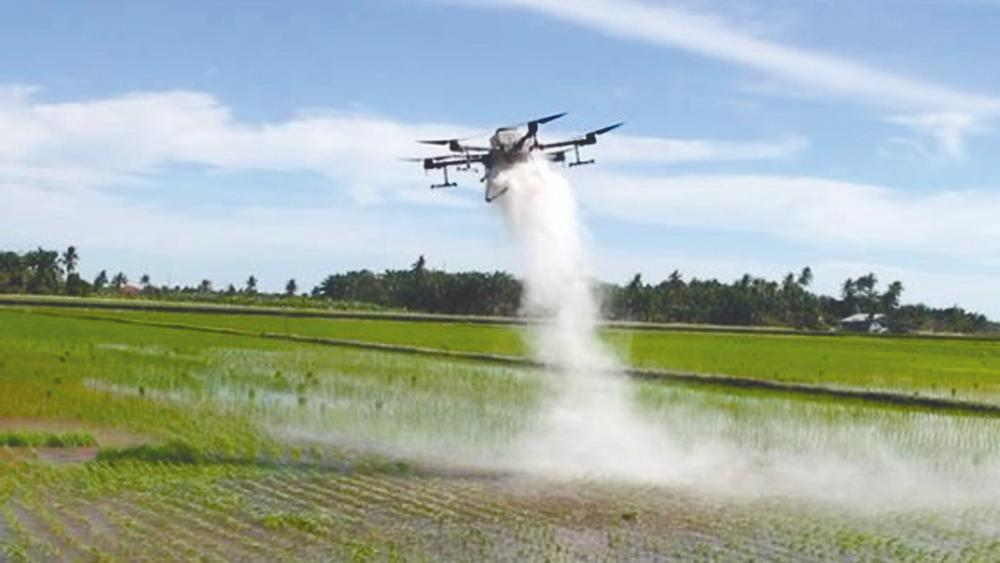 The use of T20 drone technology in the fields further accelerates the fertilising process as well as pest and disease control by farmers. – FGV pix