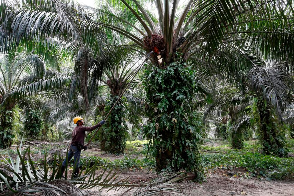 India resumes purchases of Malaysian palm oil