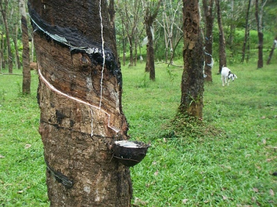 Malaysia's natural rubber production up 5.4% in Dec 2018